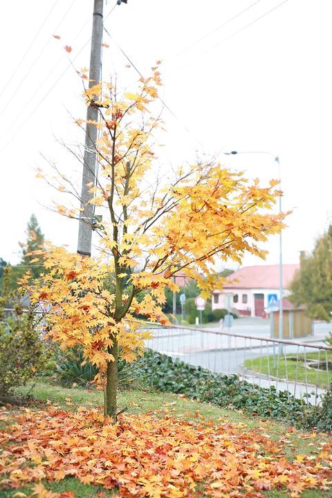 podzimni-stromy