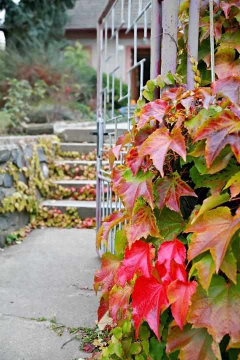 podzimni-zahrada