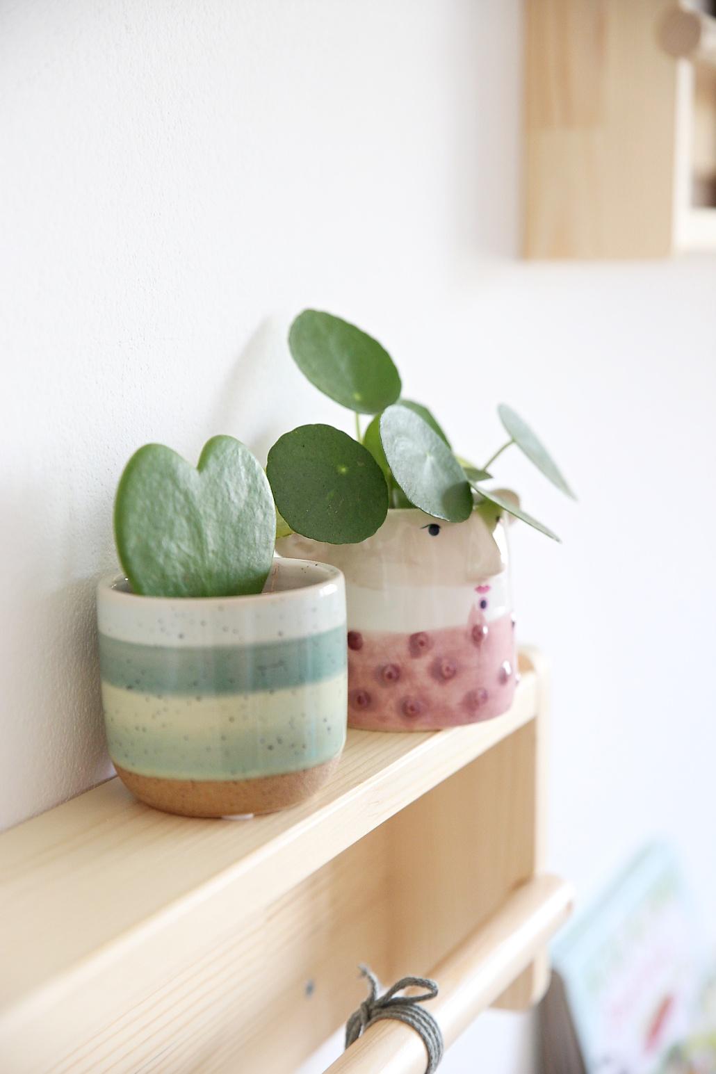 rostliny-do-detskeho-pokoje